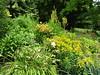 Summer flowers (wallygrom) Tags: england westsussex eastpreston angmering ferring worthing a259 highdown highdowngardens highdownhill