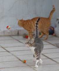 Canon_EOS_5Ds_summer_2017_Bella_Rizik_antics_a7 (Stray cats photos) Tags: