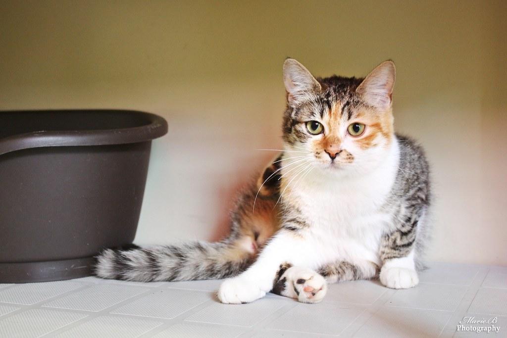 chat jeunes top sites de rencontres