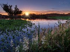 Frog Pond (Explore #18) (mikeSF_) Tags: california riovista isleton jacksonslough walnutgrove solano delta mikeoria 645 645z dfa25 25mm river pond water hyacynth