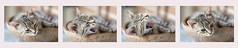 Awakening (pasquale di marzo) Tags: interno gatto collage 50mm luglio 2017