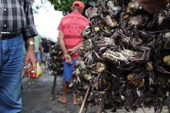 Buying crabs / Comprando caranguejos (Diogo Markz) Tags: canont5 nofilter noediting market people vegetables fruit work urban city crab