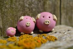 3 Little Pigs (rawdonfox) Tags: piggies 3 three macromondays nikond5200 nikon rawdonfox ceramic