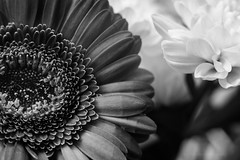 Sony a7 50mm (Jasrmcf) Tags: ilce7 sel50f18f sony sonya7 sonyalpha sonya77 macro dof macros macrotube detail delicate depthoffield blackandwhite flower flowers smooth blur bokeh bokehlicious bokehgraph 50mm vintage ngc greatphotographers nature