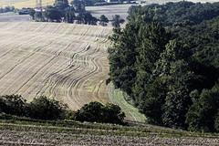 Champs du lauragais (floLMA) Tags: lauragais fourquevaux