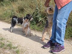 UNTERWEGS (rentmam1) Tags: dog hund