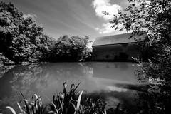 Le point d'eau (Fred (Mi.Femme.Mi.Fouine)) Tags: pentaxk1 exterieur pentaxart mare pond water monochrome