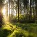 Magic forest (Sebo23) Tags: light lightbeam lichtstimmung morgenstimmung morninglight morgenlicht sonnenstrahlen sonnenstern sun sunbeams sunstar wald forest magic nature naturaufnahme natur landscape landschaft canon6d canon16354l
