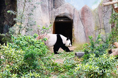 18 (樂活的大方) Tags: 20170724sb 新加坡動物園 river safari