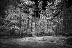 crepuscular eve (Sweedon~) Tags: trees woodland infrared canon canon5dmarkiii sweedon forest path evening dusk grass sky clouds leaves branches clearing