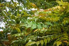 DSC_8053 (andrey.salikov) Tags: 180550mmf3556 8004919657 b704 bonnyrigg dalhousiecastle eh193jb magnifique nikond60 scotland atrevida beautiful buenisima colour colourfulplaces dreamscene europe fantastic fantasticcolors fantasticplaces foto free goodatmosphere gorgeous harmonyday2017 harmonyvision impressive light lovely moodshot nice niceday niceimage niceplace ottimo peacefulmind photo places relaxart scenery sensual sensualstreet streetlight stunning superbshots tourism travel trip wonderful шотла́ндия отпуск туризм