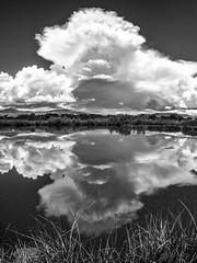 IMGP1858-Edit (Matt_Burt) Tags: arsat3035 bw clouds grass merglemanpond reflection storm summer thunderhead water