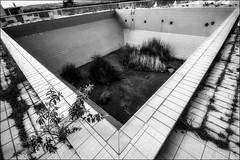 Disparition programmée... (vedebe) Tags: piscine abandonné decay urbain urbex ecologie noiretblanc netb nb bw monochrome ville city rue street architecture