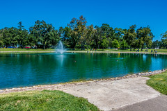 Day at the park (randyherring) Tags: recreational california elkgroveregionalpark elkgrove nature centralcaliforniavalley aquaticbird park lake outdoor trees ca unitedstates us