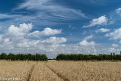 P50_8231-1 (pavelkricka) Tags: holbrook barley fields sky botechelli