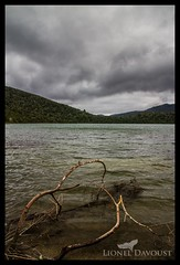 Stormy Zealand (Lionel Davoust) Tags: hdr newzealand bigsky branch forest lake nature panorama perspective stormy water wind