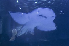 IMG_0628 (Lilly Wendel) Tags: newportaquarium newport kentucky usa