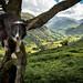 Pop up a Tree (JJFET) Tags: border collie sheepdog dog borrowdale lake district seatoller seathwaite tree climbing