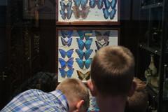 (andrew gallix) Tags: william yeartwelve hornimanmuseum london alfie butterflies