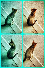 •Fidget (sergiochubby) Tags: kitten cat cats pet animal cute funny collage action