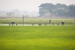 suphan buri - thailande 6