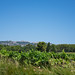 """2017_07_15-29_Mazan_Provence-95 • <a style=""""font-size:0.8em;"""" href=""""http://www.flickr.com/photos/100070713@N08/36248399496/"""" target=""""_blank"""">View on Flickr</a>"""