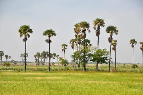 parc national sam roi yot - thailande 88