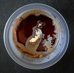 Contaminação em clonagem de cogumelo comestível em agar (Valter França) Tags: contaminação agar cultura clonagem cogumelo fungo fungi petri