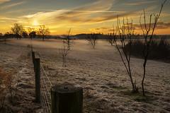 "End Of Year Dawn - 122614-071904 (Glenn Anderson.) Tags: fog clouds dawn trees nature nikon morning pasture ""ground fog"" photoshop cs5 sky cloudsstormssunrisesandsunsets"