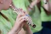 Farbenspiel in blau (bildidee@icloud.com) Tags: musik flöte querflöte noten farben finder musizieren klang