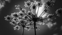 Things are looking up (Kathryns Photography) Tags: loversoflight sky contrast perspective iloveblackandwhite