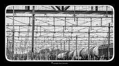Overhead (contact) wire (Ruud.) Tags: ruudschreuder nikon nikond810 d810 bw zwartwit monochrome blackandwhite blackwhite nik silverefex roosendaal trein spoor rail railway eisenbahn stroomdraden powerlines shuntingyard rangeerterrein