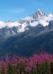 Couleurs des Alpes (morganelafond) Tags: couleurs fleurs flowers colors alps alpes mountains montagnes neige clouds nuages snow violet sky ciel mont pic