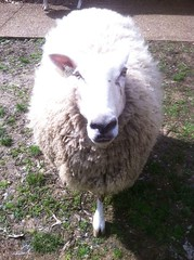 Farm Animals (LandBetweentheLakesKYTN) Tags: homeplace landbetweenthelakes lbl kentucky tennessee animals heritage farm familyfriendly