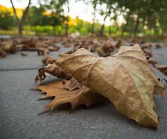 Is it really Fall already? (danieltimmerman) Tags: leaf leaves fall san ramon bishop ranch br15
