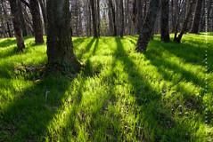 Spring's Long Shadow NC Mountains (Mark VanDyke Photography) Tags: spring green grass northcarolina westernnorthcarolina nc wnc forest trees shadows longshadows seasonal lastlight evening outdoors outside landscape outdoorphotography