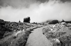adventures in cascadia, part two (manyfires) Tags: film analog pnw pacificnorthwest washington landscape hike hiking outdoors nikonf100 35mm mtrainier mtrainiernationalpark nationalpark skylinetrail bw blackandwhite trail path paradise
