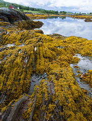 Low-tide in Straumen (Antti Tassberg) Tags: kesä landscape norja travel kallio reflection straumengodoybru laskuvesi hdr levä bru ebb low norge norway rock seaweed tide nordland no