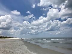 218/365/6 (f l a m i n g o) Tags: florida ormondbeach friday 2017 28th july 365days project365 explore daytona ocala water beach manatee