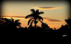 Ao cair da noite... MCris (MCrissssss) Tags: anoitecer coqueiro noite photo pordosol sunset life magic beatiful