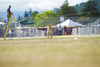 _MG_9941 (Corey Polis) Tags: akc coursing dogsports fastcat july302017 mushu nwrrc sequim