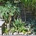 Cactaceae & succulent plants