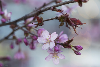 Beauty of Nature, Spring Blossoms