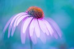 Dancing queen (SonjaS.) Tags: botanischergarten tübingen dancingqueen blume flower doppebelichtung double exposure doubleexposure weisabgleich canon6d sonjasayer kunst