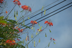 cables and flowers (Hayashina) Tags: colombia santafedeantioquia flowers cables htt