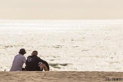 Bromance (Azezjne (Az photos)) Tags: canon 75300 50 stm 600d berck sur mer bercksurmer cote côte dopale bromance plage sable bokeh zoom coucher soleil sunset beach sand eclipse dune mouette animaux animalière flou 75 300