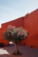 Pink and red (sacipere) Tags: santacatalina arequipa peru tree arvore baum red kloster monasterio cloister