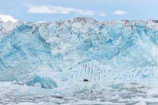 Columbia Glacier's face