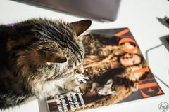 Vogue: Bêtes de mode (PaaulDvD) Tags: chat cat pet animal compagnie felin colors