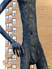 20-foot statue, The Family of Man (detail) (JasChamPhoto) Tags: canada alberta calgary thefamilyofman statues artinstallation publicart albertaeducationcentre nude 20foottall 1969 armengol bronze